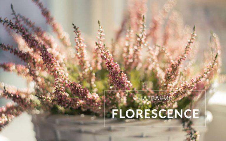 Разработка нейминга для интернет-магазина цветов